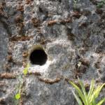 Bienenfresser Niströhre
